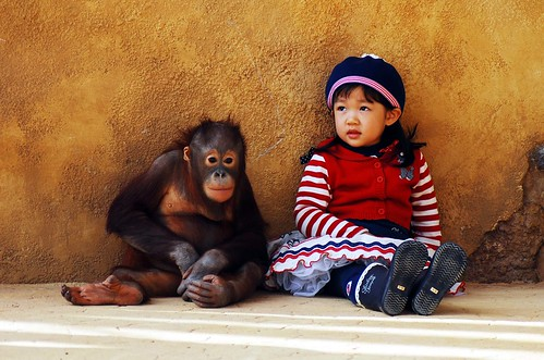 Everland orangutan & cute girl | by floridapfe