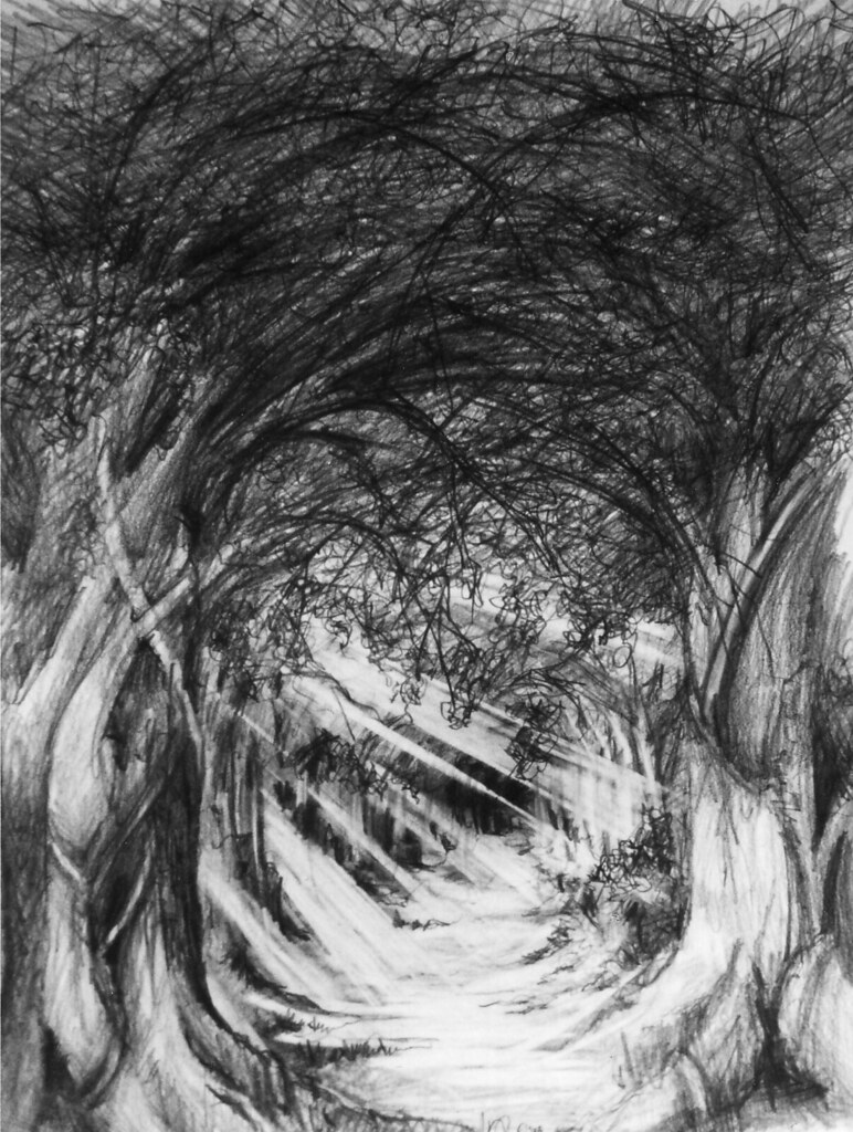 Pencil drawing - The Woods | For more of my work please visi ...