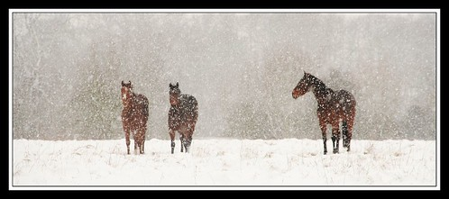 Snow horses | by kev350d