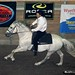 CanAm Andalusian gallops