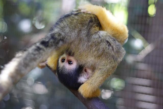 Dating monkey
