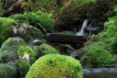 Mossy Brook | by Clyde Barrett