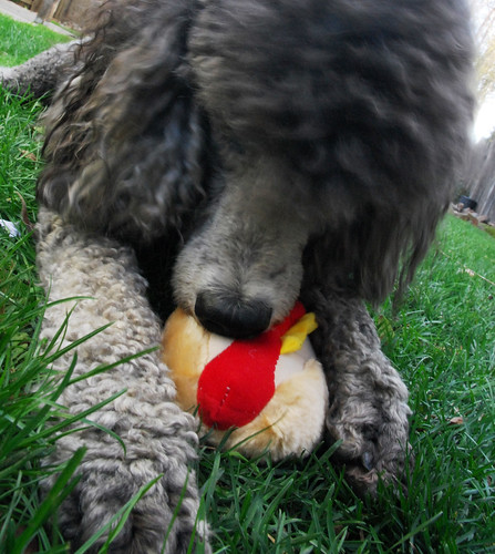 Image Result For Dogs Without