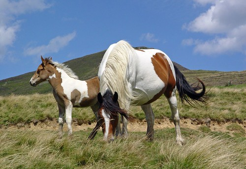 Whild Horses in the Pyrenees | by Bruno Misseeuw