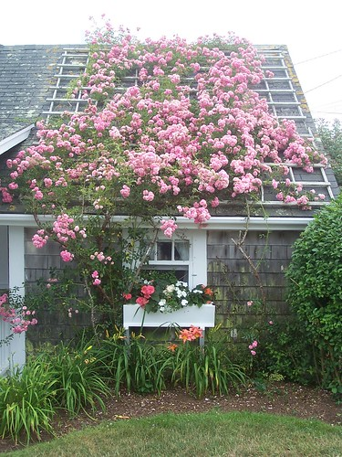 Rose Covered Cottage | by rochpaul5