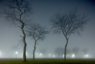 Trees and Fog | by metroblossom
