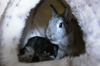 Snuggle bunnies | by Mark Philpott
