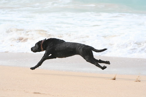 Image Result For Dog Throwing Up