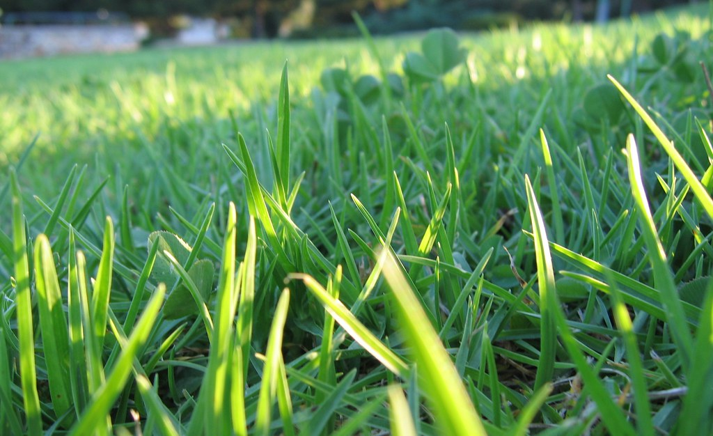 Not a blade of grass a long time ago i took my long for Like long grasses