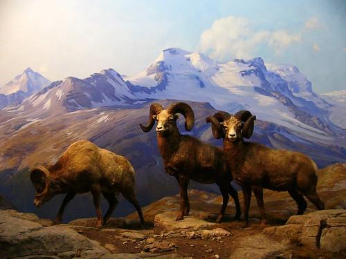 Denali Natural History Tour Vs Tundra Wilderness Tour