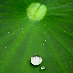 Drip Drop | by ♥ tasha-lynn ♥