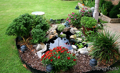 goldfish-pond | Front yard water feature | Terence Young ... on Front Yard Pond id=15009