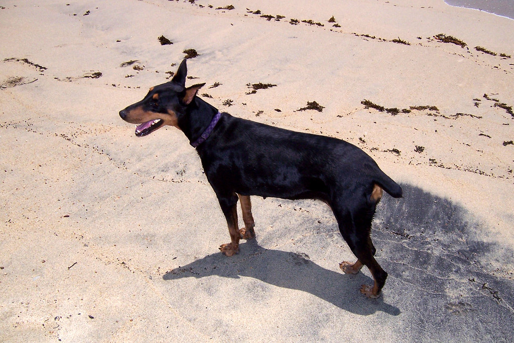 Dog Friendly Beach House Rentals East Coast