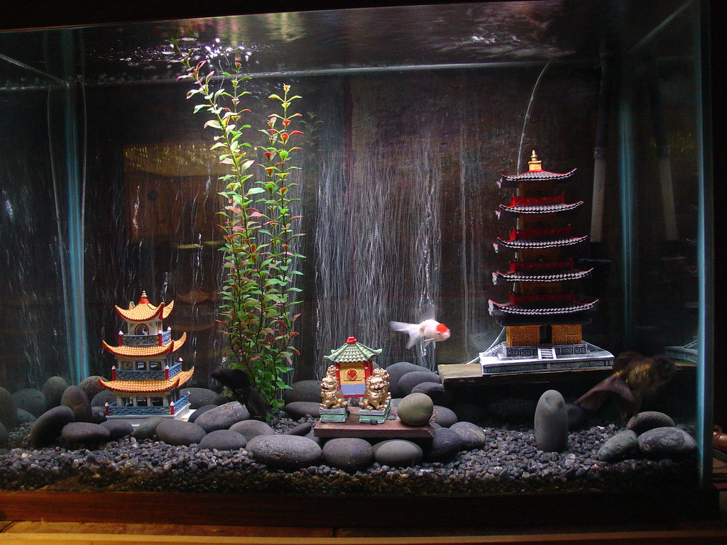 Goldfish tank this is my 60 gallon goldfish tank lori for Pet koi fish tank