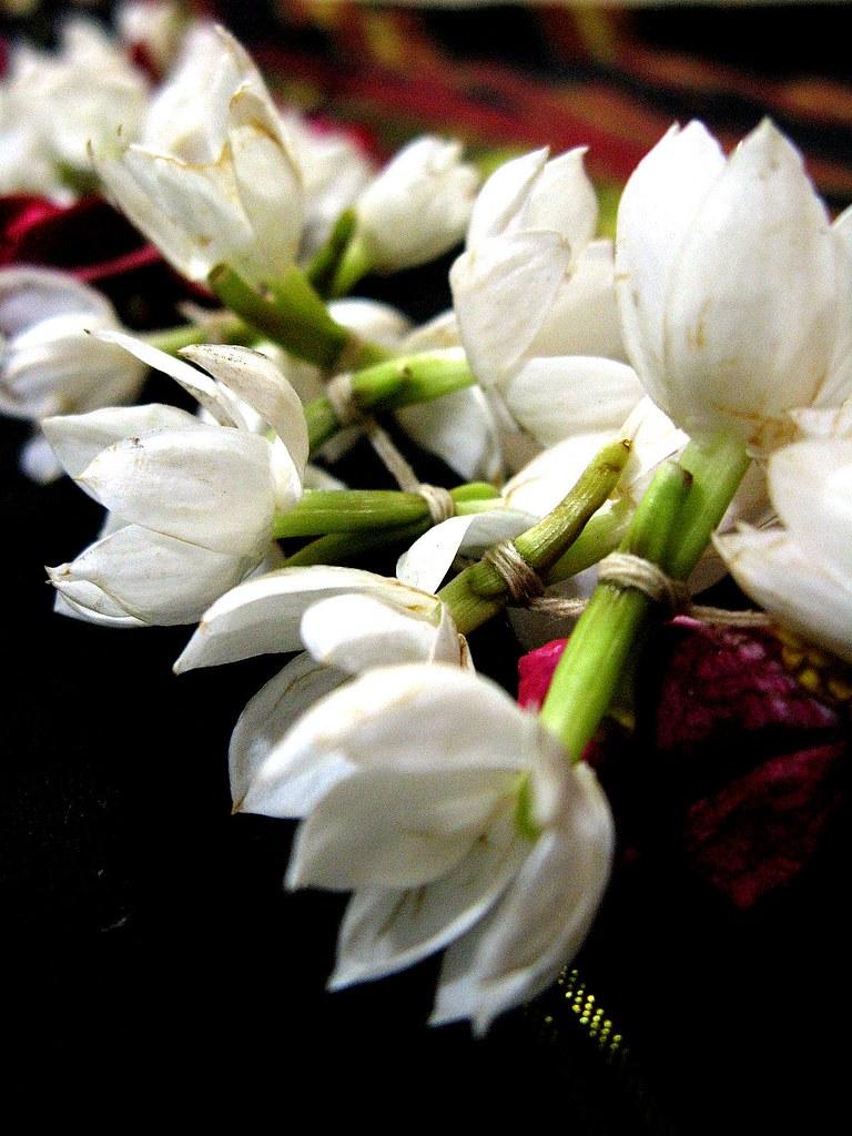gajra we indian women love to wear this string of fragra u2026 flickr