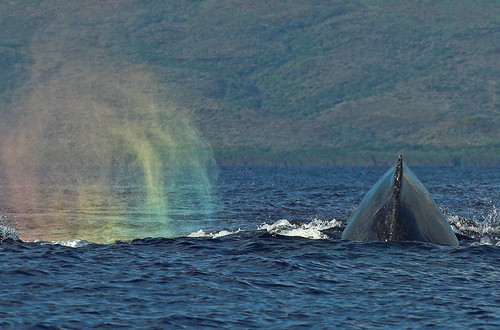 Whale in the Rainbow | by KaroliK