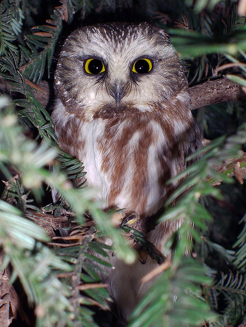 northern saw