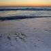 Predawn Atlantic Ocean