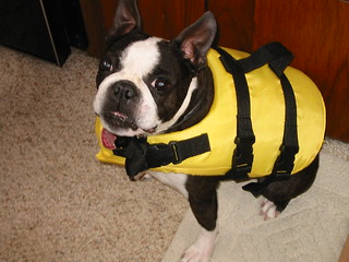 Darcy in life preserver | by daveschappell