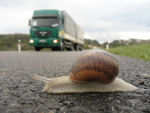 Snail in danger near Zadar, Croatia [EXPLORED] | by Robert Thomson