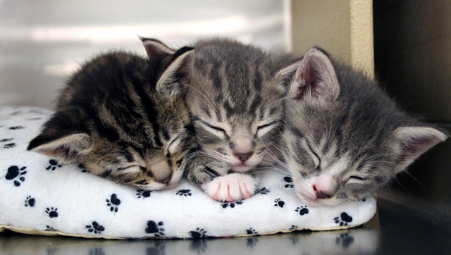 The Sleepiest Kittens You'd Ever See On The Internet (25  Pics ...