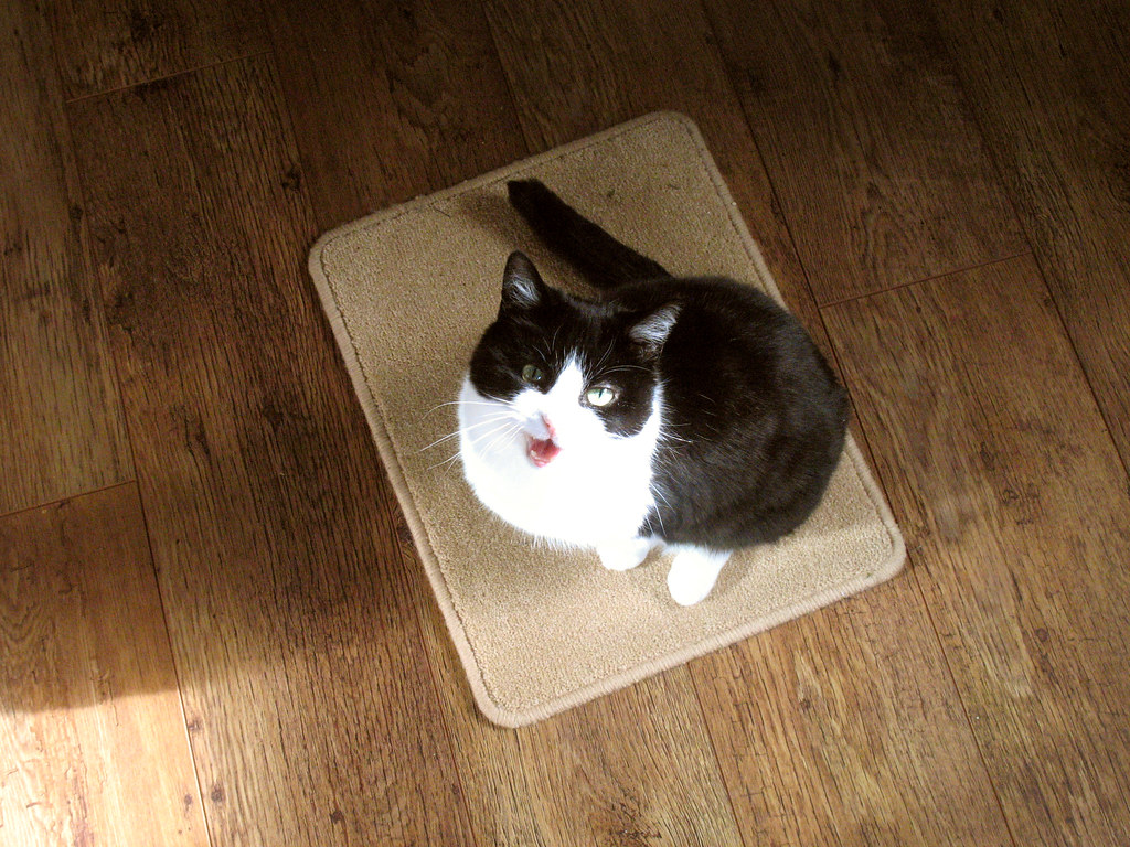 My cat sat on the mat ...