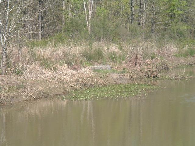 Bass Fishing Lake Eufaula Alabama