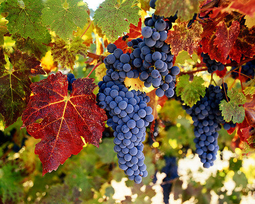 The Colors of Napa Valley | by Lightchaser