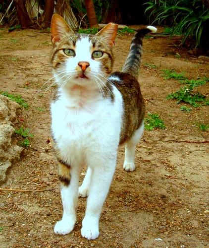 Feral cat program jacksonville fl