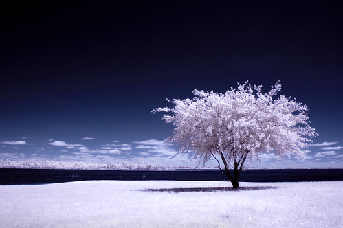 a winter summer (infrared) | by mike.irwin