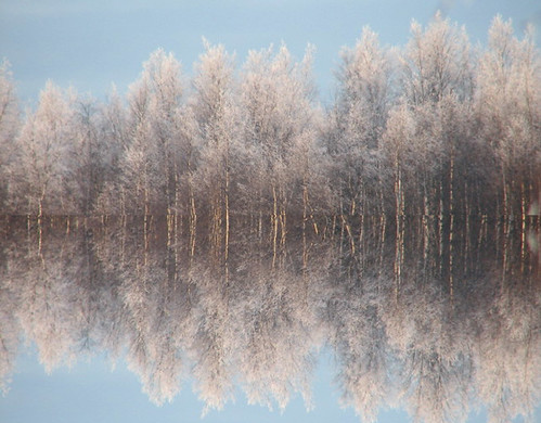 Forest reflection | by Vaeltaja