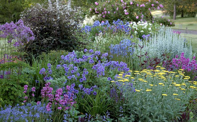 Perennial border early summer we always say the the borde flickr - Perennial flowers for borders visual gardens ...