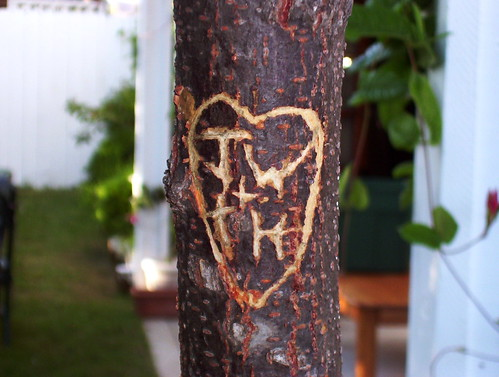 Tree hearts | by Jono Rotten