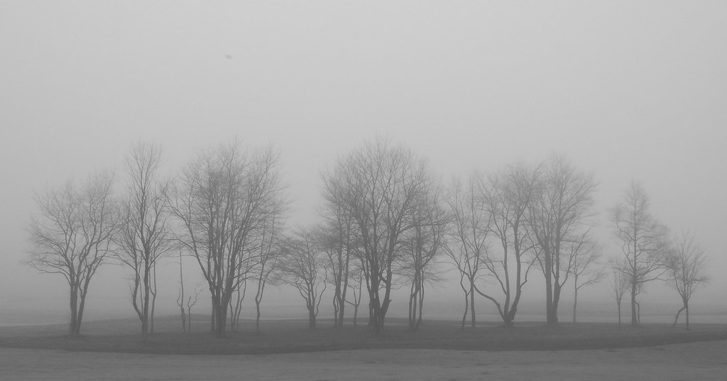 a very, very foggy day   This was a late morning in mid