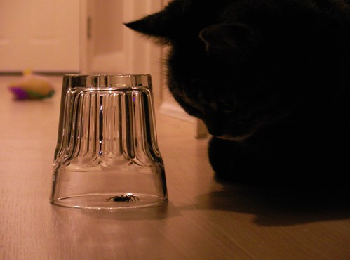 The Cat, the Spider, and the Mouse | by lisa connolly