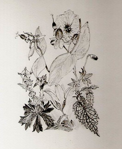 flower drawing | pencil drawing of flowers and leaves found ... Pencil Drawing Pictures Of Flowers
