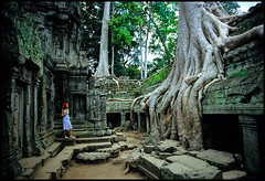 a wisdom lesson in Ta Prohm...2004 | by Alessandro Vannucci