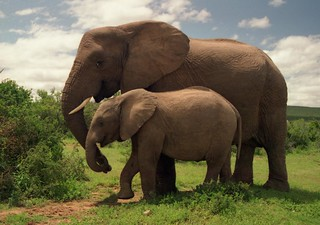 Addo Elephant National Park | by exfordy