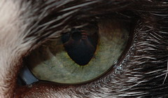 Cat Eye | by Jordi RT