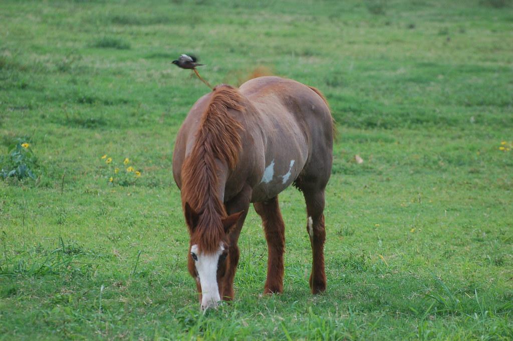 North Shore Horse Rescue Long Island