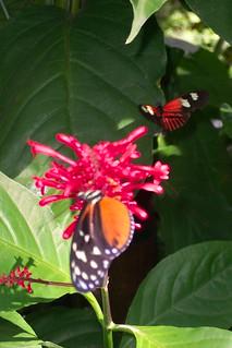 butterfly garden uf by mommalaney - Uf Butterfly Garden