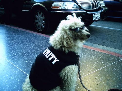 Image Result For Hollywood Dog Training