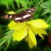 La mariposa posa