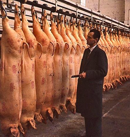 danish pork copenhagen in november 1960 livestock. Black Bedroom Furniture Sets. Home Design Ideas