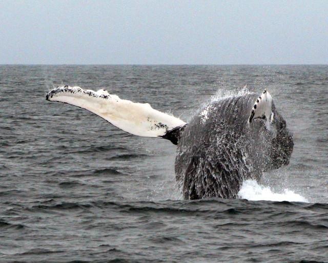 whale_3