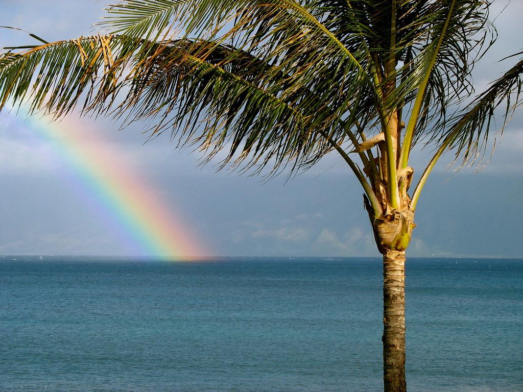 Maui rainbow with palm tree a rainbow at napili bay if - Image arc en ciel gratuite ...