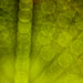 ecstasy green grid