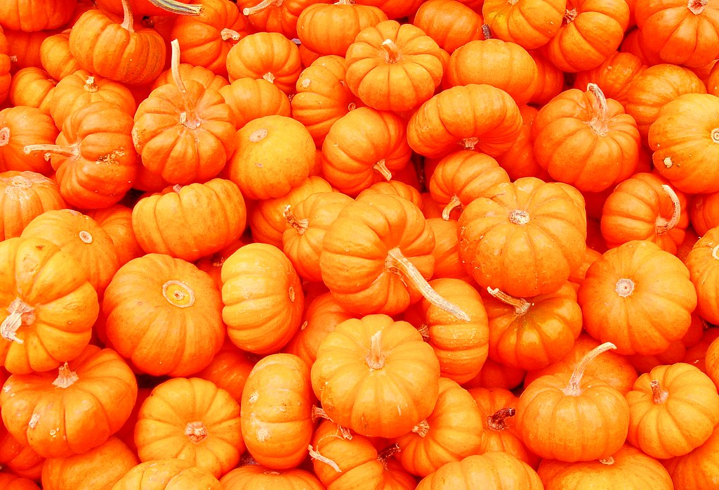 Mini Pumpkins And Gourds Whole Foods
