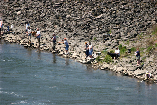 Bank fishing at bonneville dam during the spring salmon for Bonneville dam fish camera