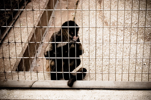 Sad little caged monkey | by Kitsuney